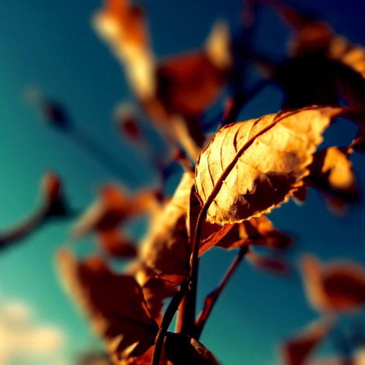 Осенняя макро съёмка