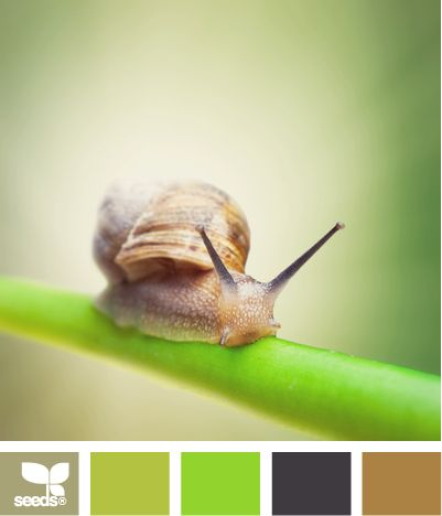 color crawlColors Crawl, Design Seeds, Spring Colors, Colors, Bright Green, Colors Palettes, Colours Schemes, Colors Schemes, Summer Colors