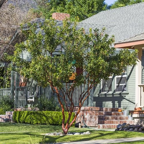 40 best california native plants ojai images on pinterest