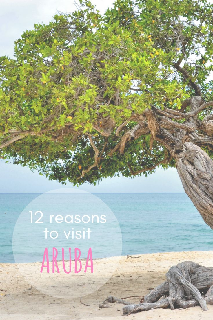 Have you ever wondered travelling to Aruba? Here are 12 reasons why you should visit this island!