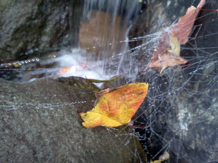 Cobwebs over the pondless at Waterscene Designs, Ladner BC