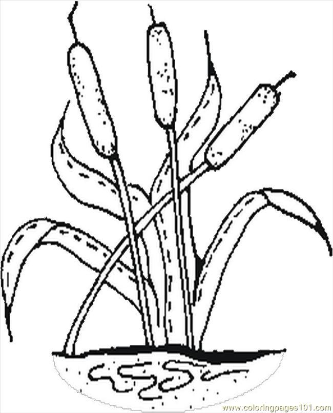 cat tail plant Colouring Pages | Coloring pages, Printable ...