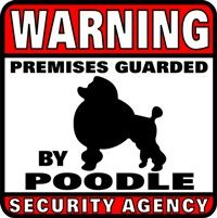 Warning, poodles. poodles