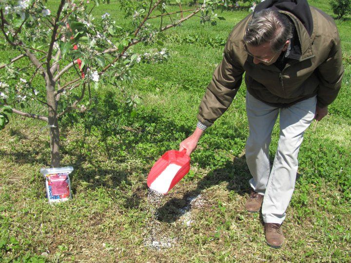 Fertilizing Trees | Ultimate Tree Care Guide For Homesteading