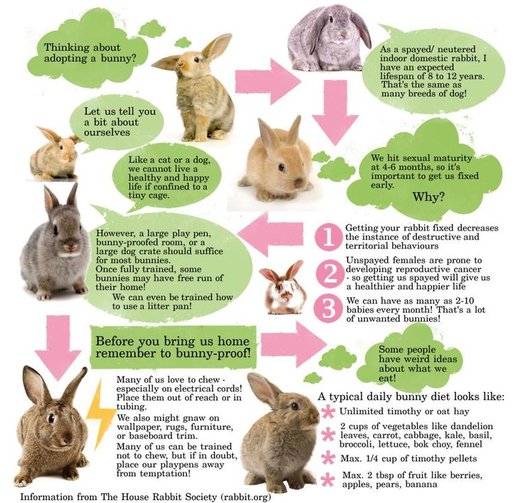 Domestic rabbit infographic. Information from rabbit.org (The House Rabbit Society). How to take care of bunnies and things to consider before getting a pet rabbit
