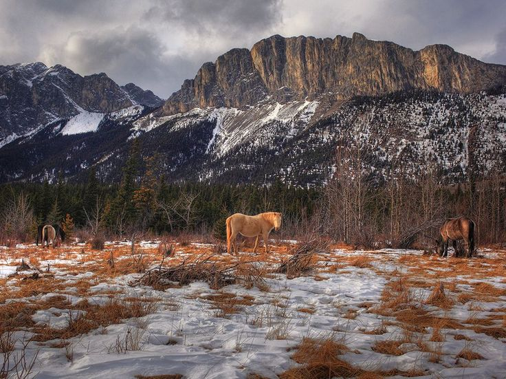 Photograph by O. Mehes.  Wild horses graze under the watch of Mount John Laurie in Alberta, Canada.