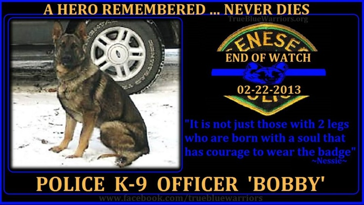 True Blue Warriors:  Geneseo Police Department, Illinois  Police K-9 BOBBY  End Of Watch: 02-22-13  Police K-9 BOBBY, 6, succumbed to intestinal damage after he began bleeding while on his patrol duty.
