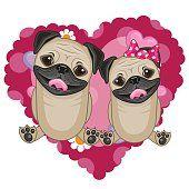 Dois cães Pug