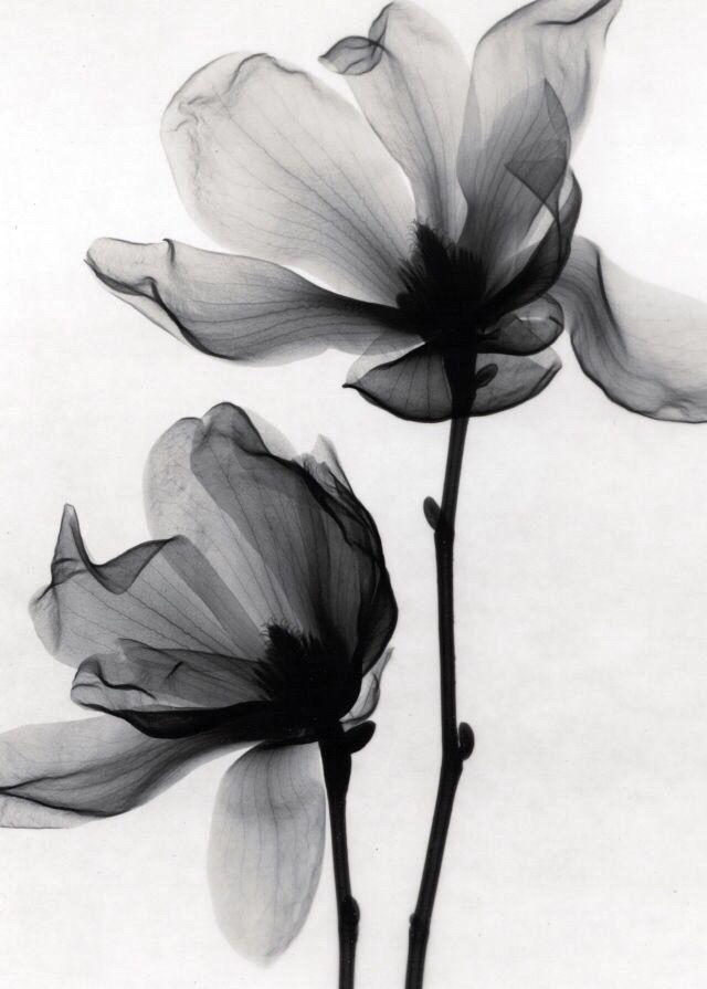 X Ray Of Rose Watercolor Amazing Tattoo For Me Yeti: Die Besten 25+ Rose Gezeichnet Ideen Auf Pinterest