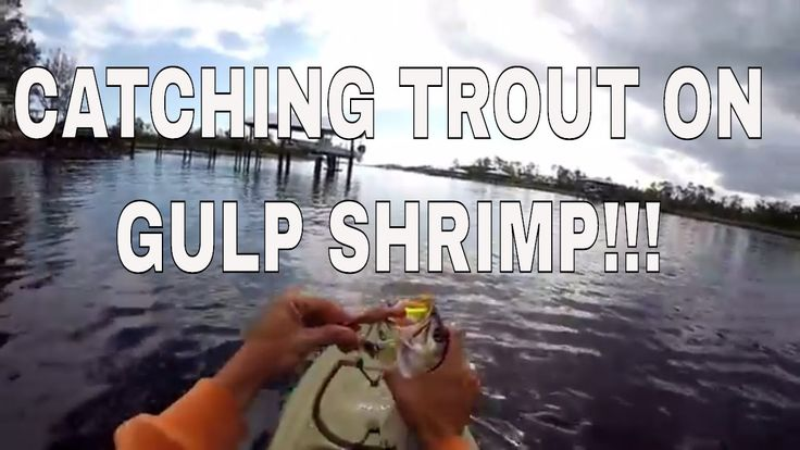 INSHORE KAYAK FISHING. How to catch trout with GULP SHRIMP. Boat Traffic...