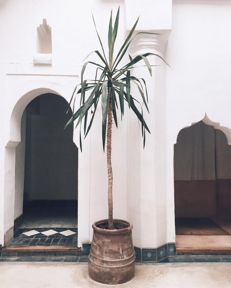 Early Sunday in Morrocco 🌿 How calming view from where I sit and work right now? 💎 (Plant goals right there🌱) #marrakech #medina #quiet #mumbaistockholmtravels #goodmorning #morocco