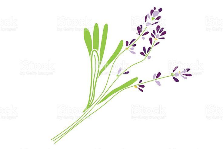 Lavender Flowers royalty-free stock illustration