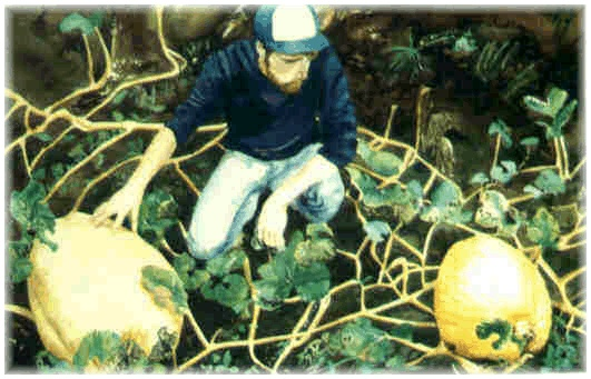 a watercolour I did of my friend and neighbour, Tony. He really grew these pumpkins!