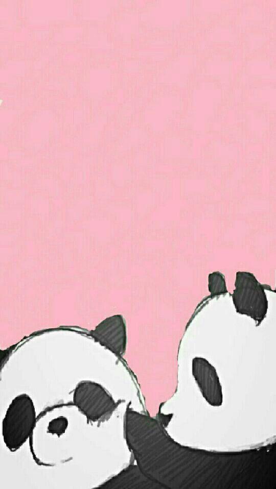Deux petit panda.