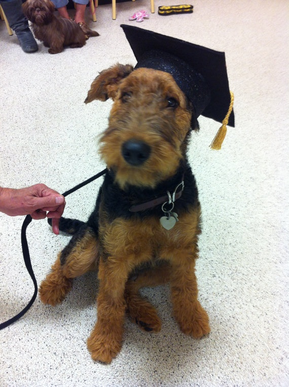 Dog Graduation Cap Graduation Hat Costume Airedale Terriers