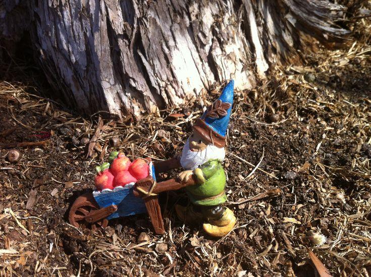 Miniature Gnome with Wheelbarrow of Apples