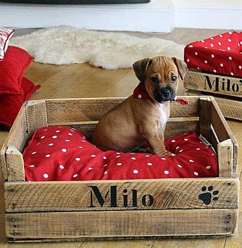 Será que o Milo está realmente protegido nesta caminha com pallets? Veja os cuidados necessários para usar pallets neste post