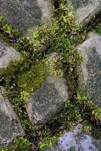 how to clean moss off patio bricks