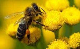 stadsdeel amsterdam zuid spuit bijen dood