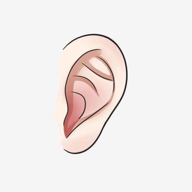 أذن ملامح الوجه شكل عصا أحمر الأذن المرسومة أذن ميزات الوجه Png وملف Psd للتحميل مجانا Ear Hand Painted Clip Art