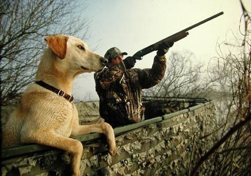 Shotgunning tips - 10 Shooting Tips for Waterfowl