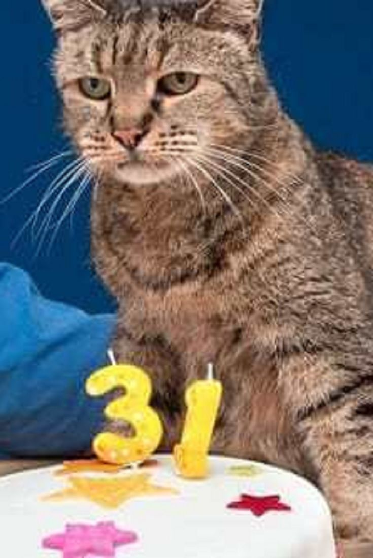 31 Year Old Cat With A Heart Problem Doesn T Let Anything Get In His Way To Living Life Cats Old Cats Happy Cat Cats And Kittens