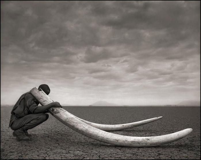 Ranger with tusks of elephants killed at the hands of man. Amboseli, 2011.