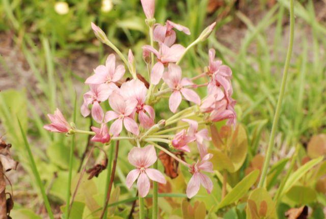 Makakatana - Wild flowers in September