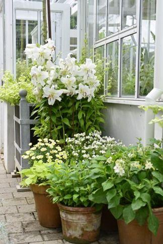 Claus Dalby - container garden
