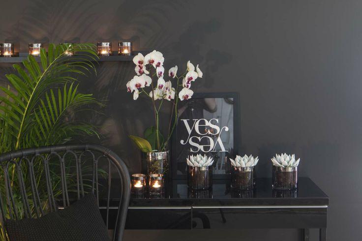 Phalaenopsis orkidé i et moderne interiør
