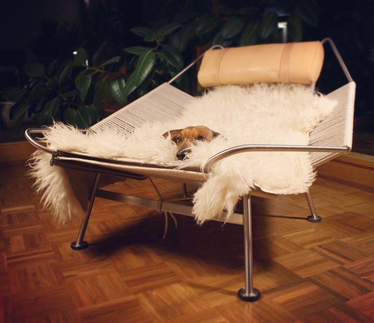 Something wondeful just landed in our livingroom - the Flag Halyard chair by Hans J. Wegner for PP Møbler, 1950. #design #designblog #danishdesign #hansjwegner #ppmobler #midcenturymodern #dachshundlife #etuovisisustus #oikotiesisustus #chairdesign
