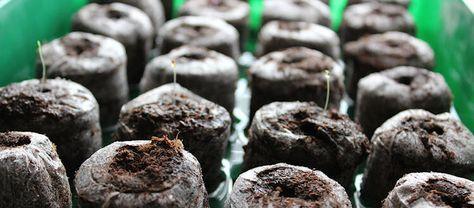 Kedy začať sadiť priesady a semienka pre zeleninu, bylinky a kvety