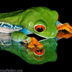 """I saw one who looks just like me!"" That's what this frog told Blog-Frog. ""This red-eyed, green tree frog said, that so long as I can see my reflection, I will never be the only one. It comforted me."" Hmmm. There's a thought!"