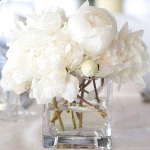 White Peonies Centerpiece : All one flower flowers arrangements pinterest