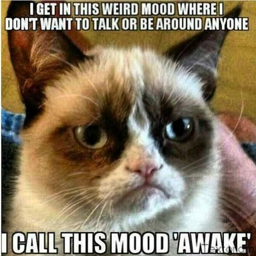 Grumpy Cat #mood. I Have Days Like This From Time To Time