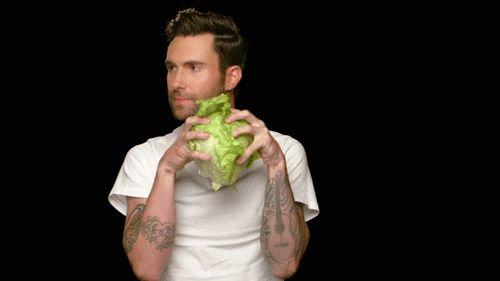 Adam-Levine-Rabbit