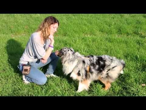 Addestramento/Educazione cani n°10 - Come insegnare il FAI CIAO | Qua la Zampa - YouTube