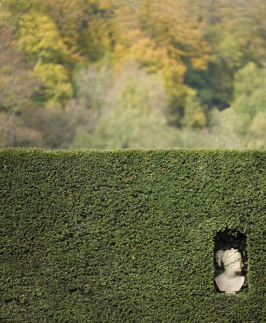 head in a hedge by stumayhew on flicr