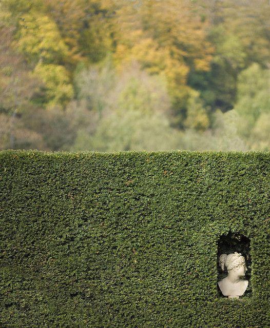 head in a hedge by stumayhew  on flicr