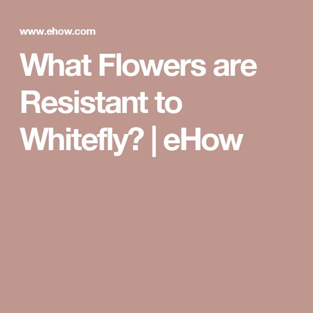 What Flowers are Resistant to Whitefly? | eHow