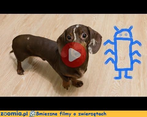 how to draw nike shoes youtube funny dog video 941001