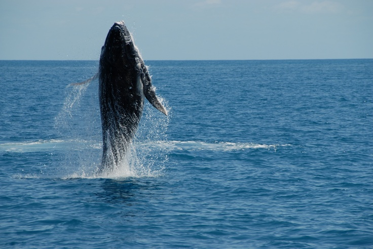 Jumping for joy! #Whalewatching