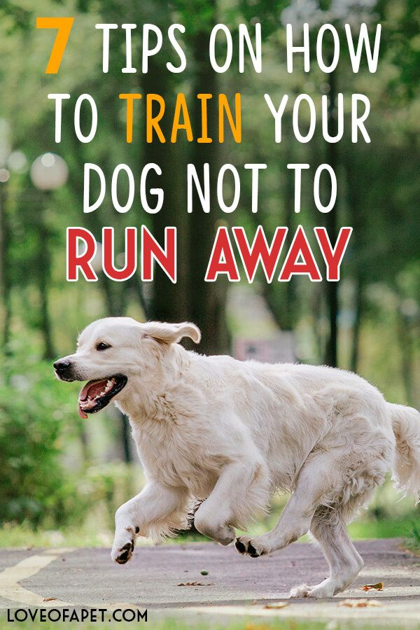 How To Train Your Dog Not To Run Away 7 Tips Training Your Dog
