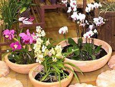 Orquídeas-como-cuidar-plantar Mais