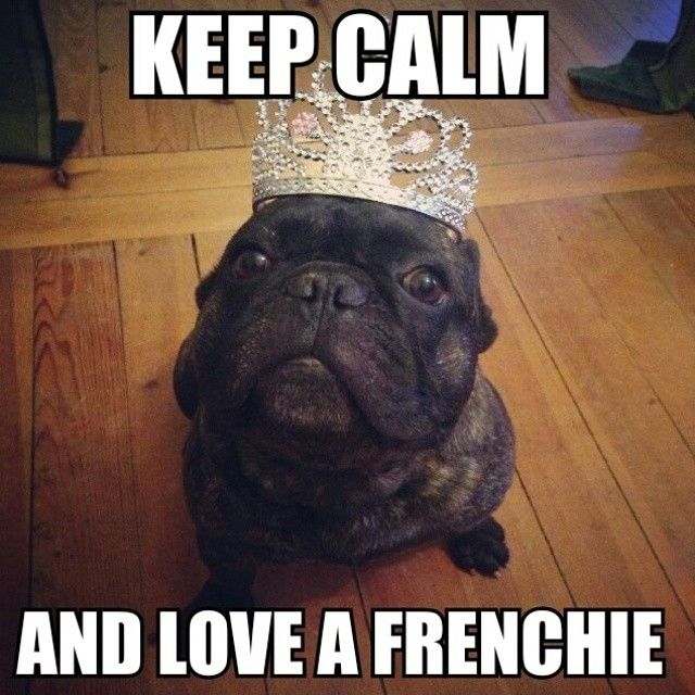 Get a Frenchie T-shirt