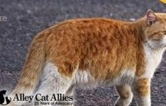 Posted April 17, 2015 Following the release of a Texas veterinarian holding up an orange cat with a bow and arrow through the head, Alley Cat Allies is now offering a $7,500 reward in an Austin County animal cruelty case.