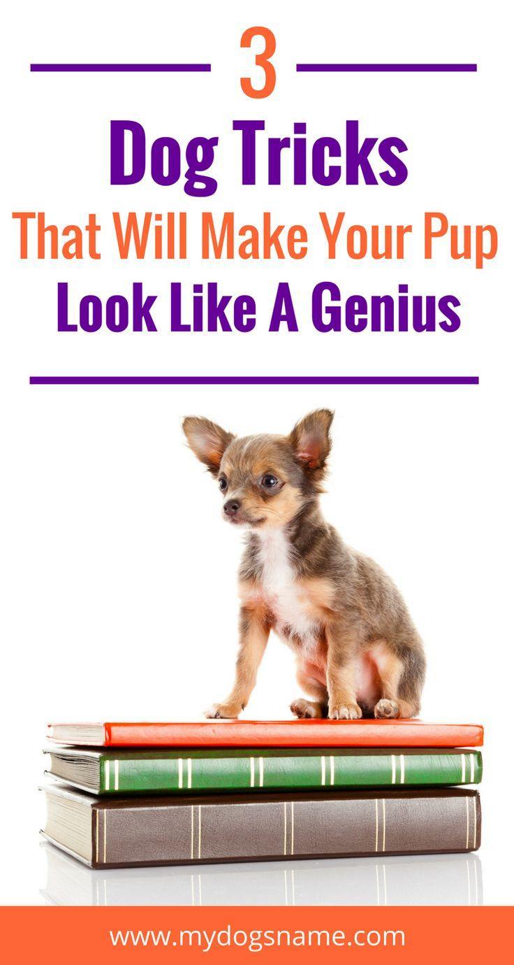 3 Tricks That Will Make Your Dog Look Like A Genius Dog Hacks