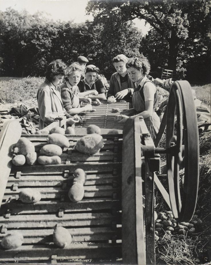 Women's Land Army sorting potatoes, 1944 (c)