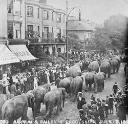 Elephants parade down Western Road, Brighton c1899. Brighton, UK.