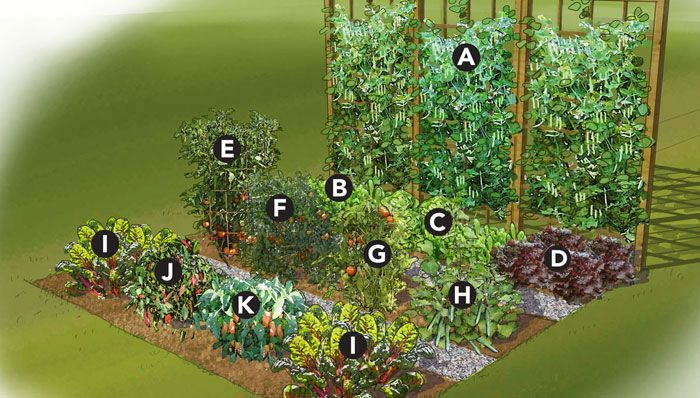 A simple small-space garden layout, with everything you'd need to pluck a perfect summer salad!